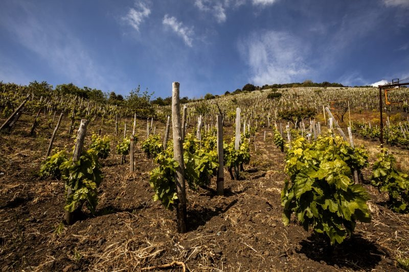 Etna Rosso, versanti e contrade: quando le sfumature contano